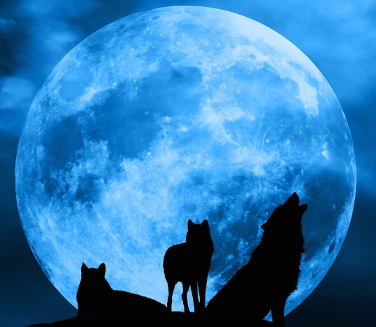 WEREWOLVES IN BLUE