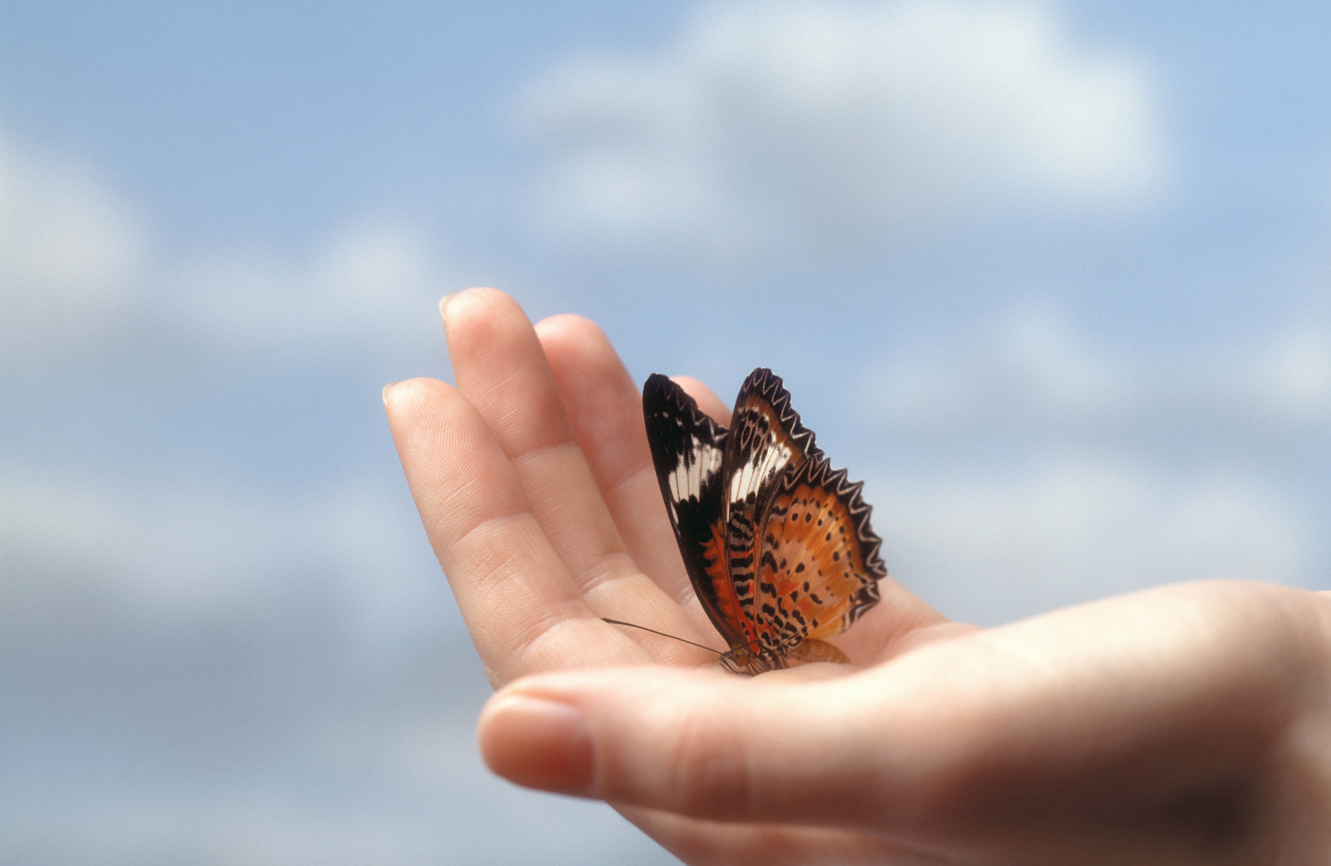 Uncategorized Butterfly Hand butterfly in hand the humble i published december 11 2014 at 1932 1257 butterfly